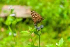 Mariposa diurna fotografía de archivo libre de regalías