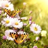 Mariposa dos en las flores Imagenes de archivo