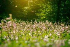 Mariposa dos en las flores Fotos de archivo libres de regalías