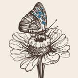 Mariposa drenada mano en una flor Foto de archivo libre de regalías