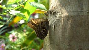 Mariposa en árbol almacen de metraje de vídeo