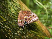 Mariposa en árbol verde Fotografía de archivo