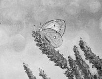 MARIPOSA EN ACEITES EN NEGRO Y BLANCO Imagen de archivo