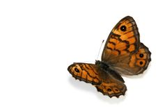 Mariposa en blanco Fotografía de archivo