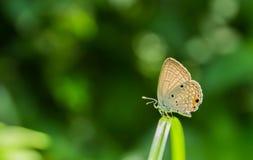 Mariposa en bosque Fotografía de archivo