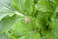 Mariposa en col Fotografía de archivo