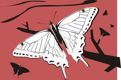 Mariposa en el árbol foto de archivo libre de regalías