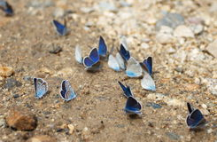 Mariposa en el camino Imagenes de archivo