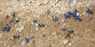 Mariposa en el camino Foto de archivo libre de regalías