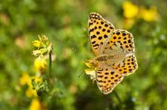 Mariposa en el campo Fotografía de archivo
