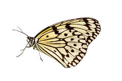 Mariposa en el fondo blanco Foto de archivo libre de regalías