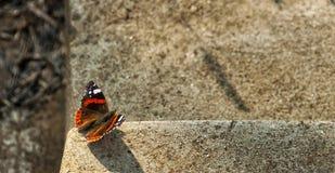 Mariposa en el fondo concreto Fotografía de archivo