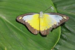 Mariposa en el jardín Imagenes de archivo