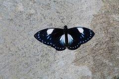 Mariposa en el jardín Fotografía de archivo libre de regalías