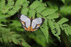 Mariposa en el jardín Imágenes de archivo libres de regalías