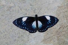 Mariposa en el jardín Foto de archivo