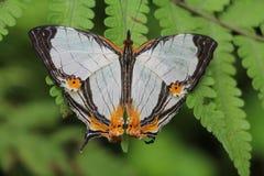 Mariposa en el jardín Foto de archivo libre de regalías