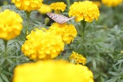 Mariposa en el jardín con la flor Imagen de archivo