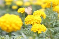 Mariposa en el jardín con la flor Fotos de archivo