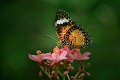 Mariposa en el movimiento Fotos de archivo