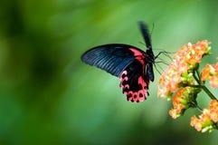 Mariposa en el movimiento Fotografía de archivo libre de regalías