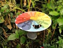 Mariposa en el parque zoológico de Londres Imágenes de archivo libres de regalías