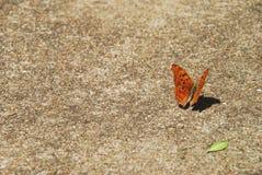 Mariposa en el pavimento 2 Imágenes de archivo libres de regalías