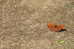Mariposa en el pavimento 3 Fotografía de archivo
