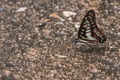 Mariposa en el piso Imágenes de archivo libres de regalías