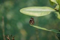Mariposa en el salto Fotos de archivo