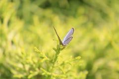 Mariposa en el tronco, listo para volar, alas abiertas foto de archivo