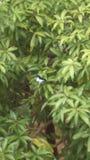 Mariposa en el verde Foto de archivo