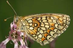 Mariposa en el viento Foto de archivo