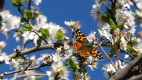 Mariposa. En flor royalty free stock images