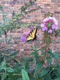 Mariposa en flores con el fondo del ladrillo Imagen de archivo libre de regalías