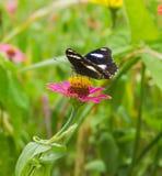 Mariposa en fondo de la flor Imágenes de archivo libres de regalías