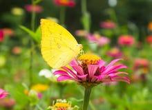 Mariposa en fondo de la flor Imagen de archivo