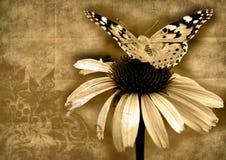 Mariposa en grunge de la flor Imagen de archivo libre de regalías