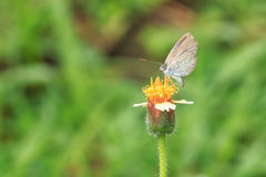 Mariposa en hierba de la flor imágenes de archivo libres de regalías
