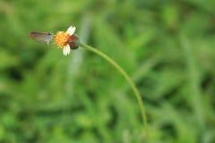 Mariposa en hierba de la flor fotos de archivo libres de regalías