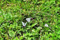 Mariposa en hierba verde Imagenes de archivo