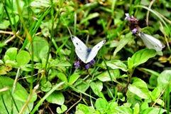 Mariposa en hierba verde Fotos de archivo libres de regalías