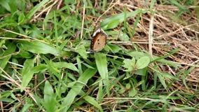 Mariposa en hierba verde almacen de metraje de vídeo