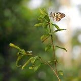 Mariposa en jardín Fotos de archivo libres de regalías