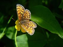 Mariposa en jardín Fotografía de archivo