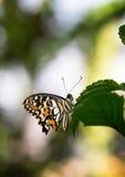 Mariposa en la armonía del color y de la naturaleza Fotografía de archivo libre de regalías