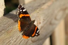 Mariposa en la cerca imagenes de archivo
