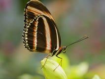 Mariposa en la flor Imágenes de archivo libres de regalías
