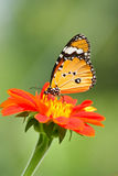 Mariposa en la flor Fotografía de archivo libre de regalías