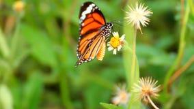 Mariposa en la flor almacen de video
